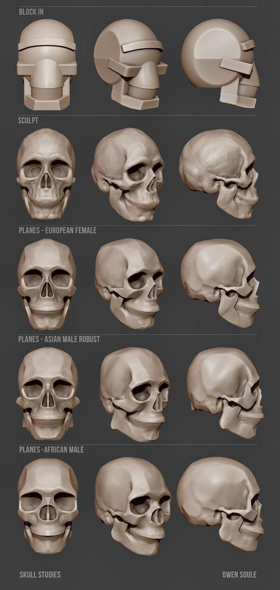 Soule Designs - Skull studies | art | Pinterest | Anatomía ...