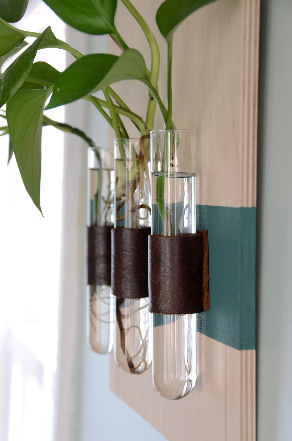 Easy Diy Wall Mounted Test Tube Vases Home And Decor Projects Vase Crafts Test Tube Crafts