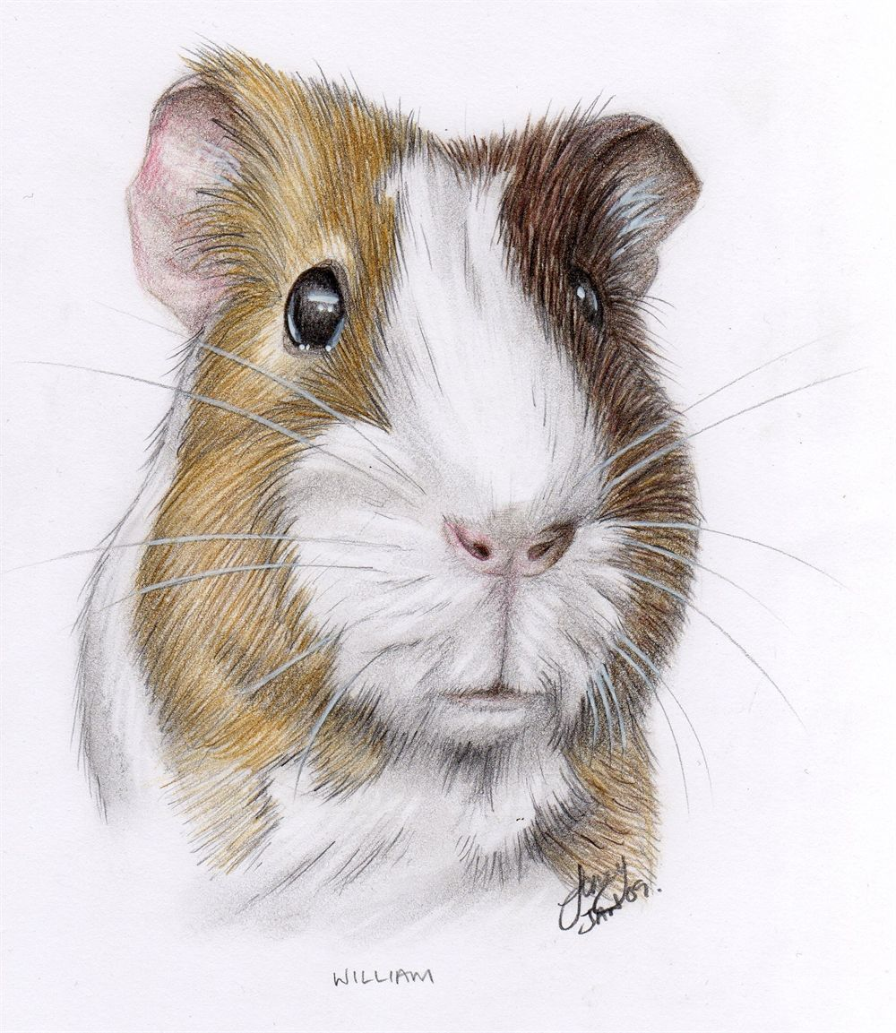 Pin On Animaldrawings In Colored Pencil