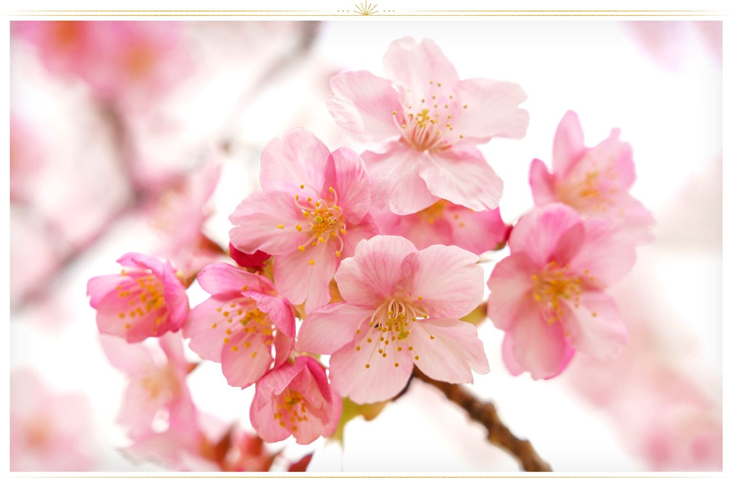 26 Types Of Pink Flowers Tips Pictures Proflowers Blog Pink Flower Names Pink Flowers Background Pink Flower Bouquet