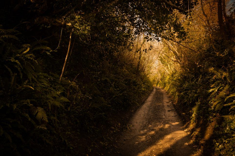Holloway / Sunken Lane in Dorset.