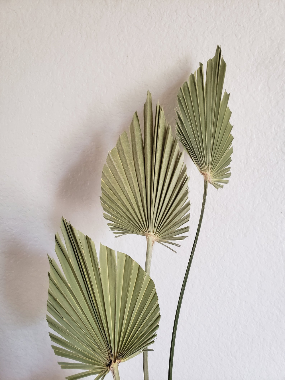 Trimmed Palm Flutters Dried Sage Green Palm Leaves Dried Etsy Palm Leaf Decor Leaf Decor Sage Green