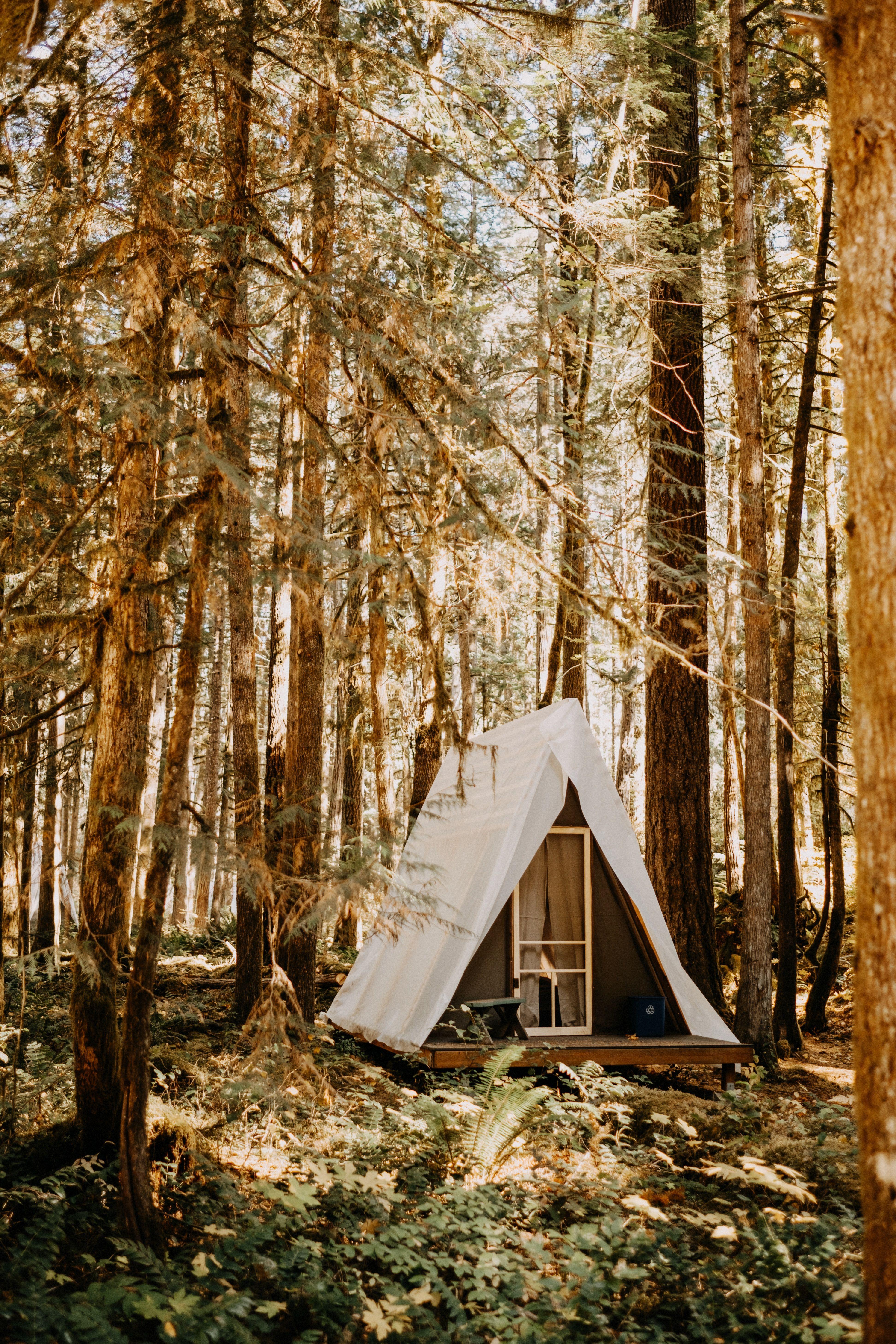 Loloma Lodge Wedding in 2020 Forest wedding, Wedding