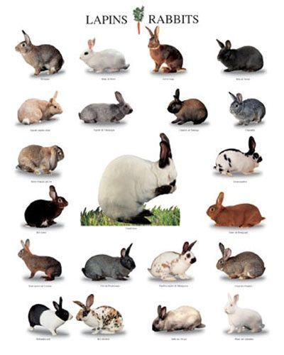 Did You Know That There Are 50 Different Species Of Rabbits