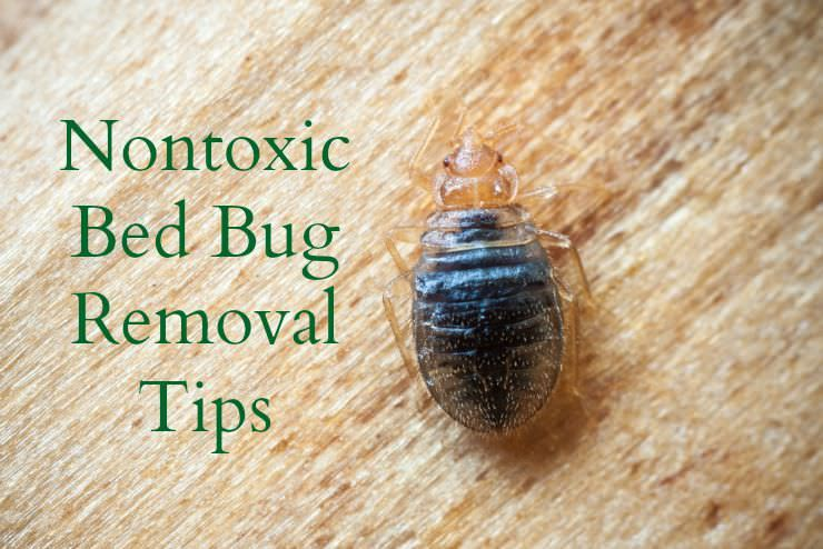 Natural Ways To Eliminate Bed Bugs Rid Of Bed Bugs Bed Bugs Bed Bugs Treatment
