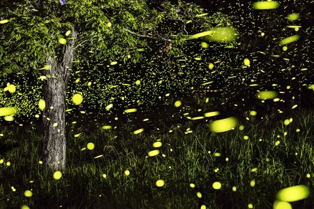 Fireflies of the Ozarks Photo by Vincent Brady — National Geographic Your Shot