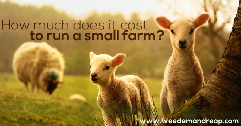 How much does it cost to run a small farm? Small farm