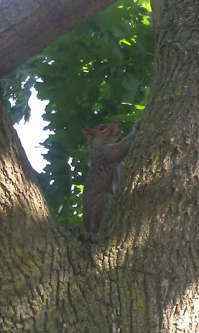 Squirrel next to my house chillin