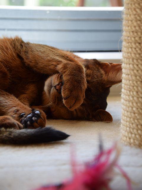 Puma Cat | Pawshake