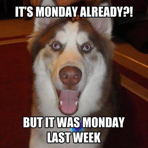Funny Meme Mondays : Monday again really funny memes pinterest mondays