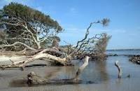 Drift wood beach, on Jekyll