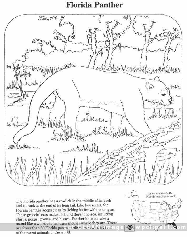 Florida Panther Coloring Pages Florida Panther Public Domain