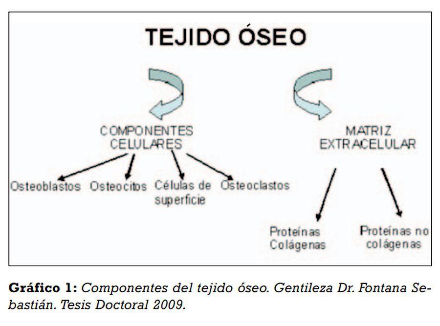 PDF: Diferentes alternativas de Rellenos Óseos