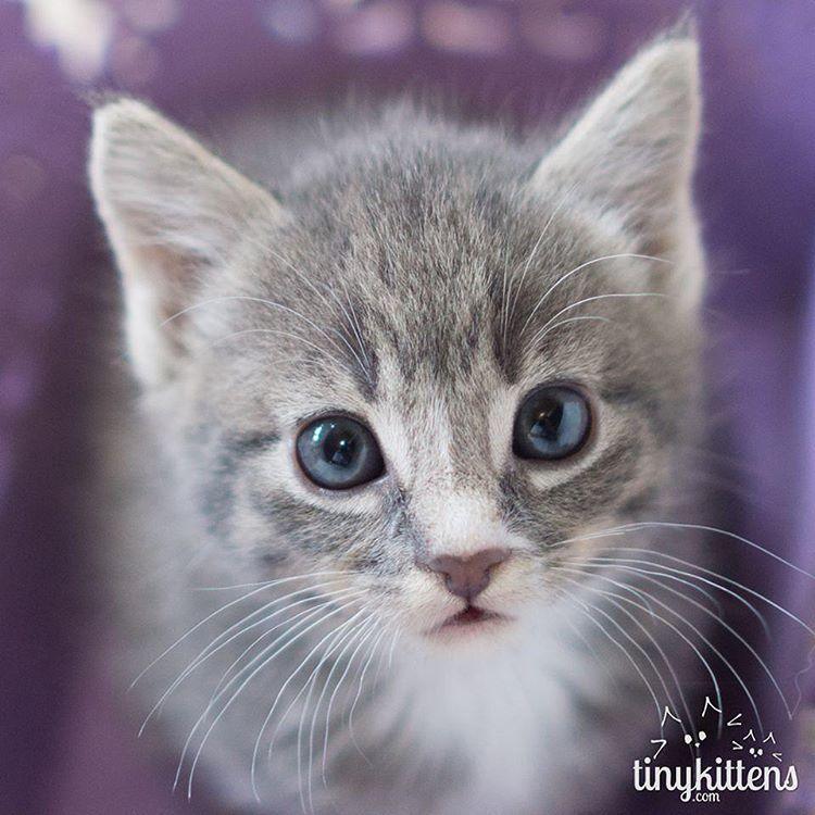 Instagram Cats And Kittens Grumpy Cat Humor Foster Kittens