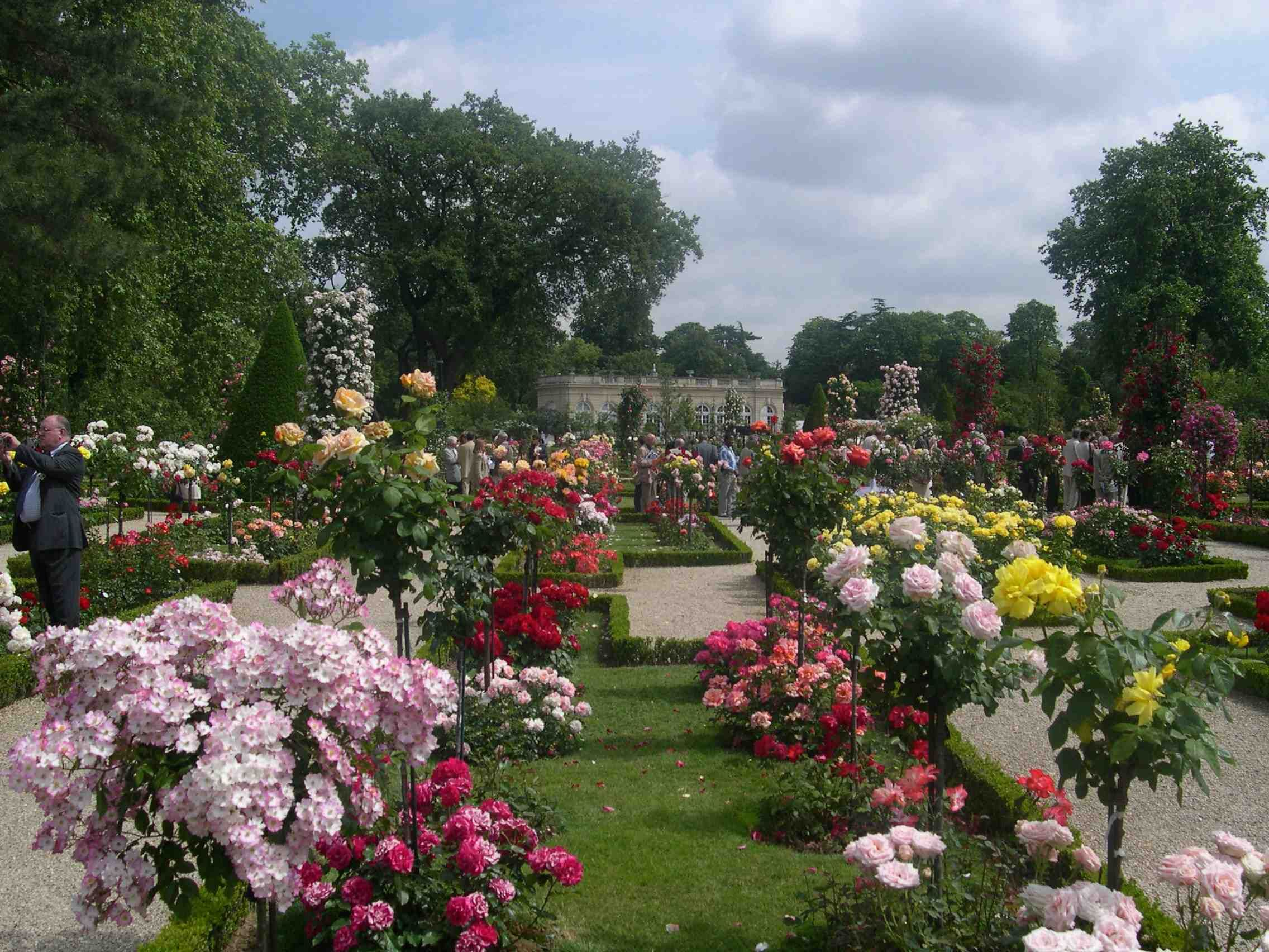 Lots of standard roses in the garden bagatelle rose for Bagatelle jardin