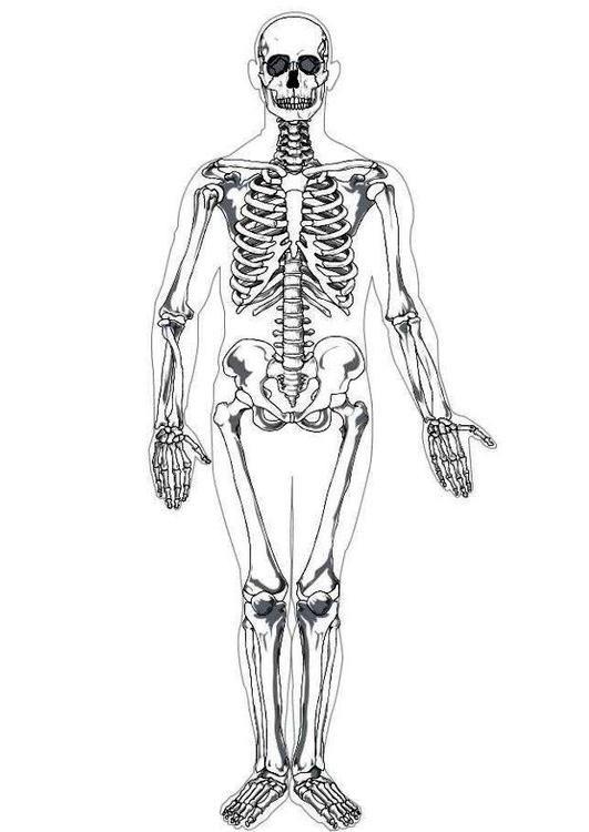 Coloring page human skeleton coloring picture human skeleton