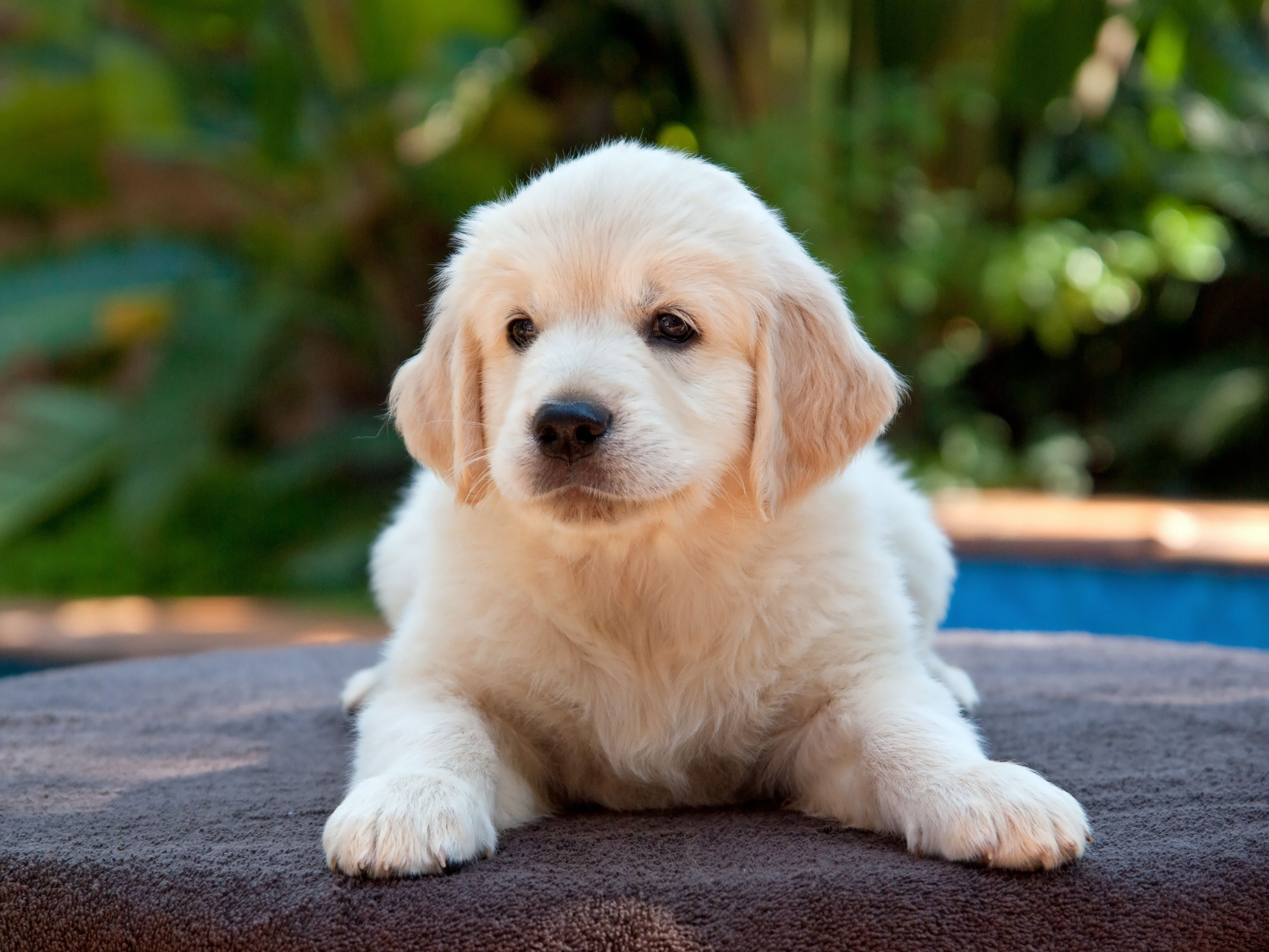 Your Welcome Picture With Puppy Cutepuppydiscover A Number Of