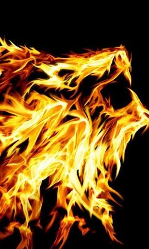 Pin By Bradlee Marlin On Fire Pinterest Fire Lion Lion And Fire