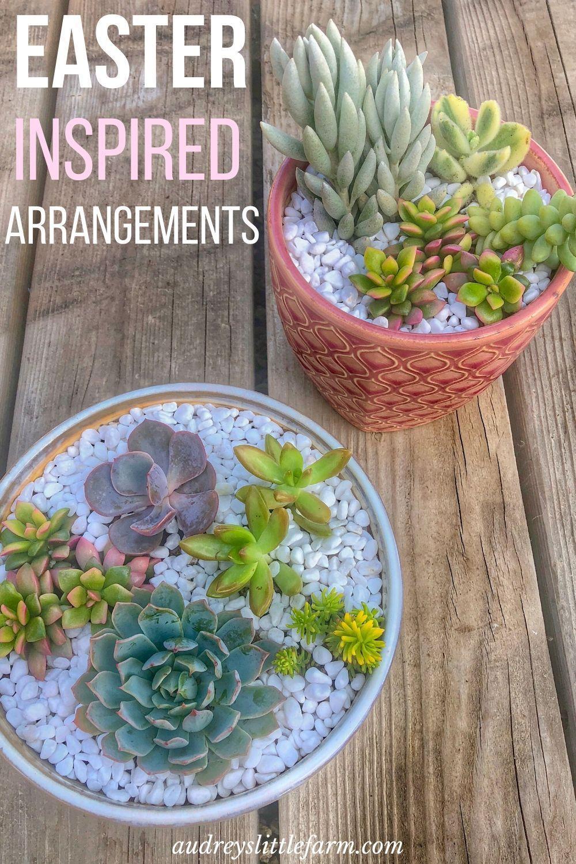 Pin On Succulent Arrangements