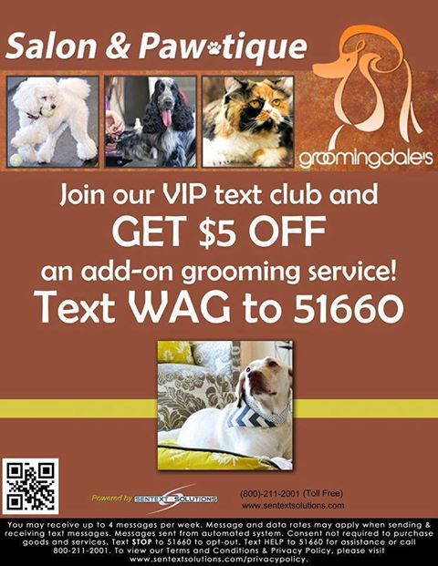 Pin By Groomingdale S Salon On Pet Grooming Billings Mt Pet Grooming Grooming Pets