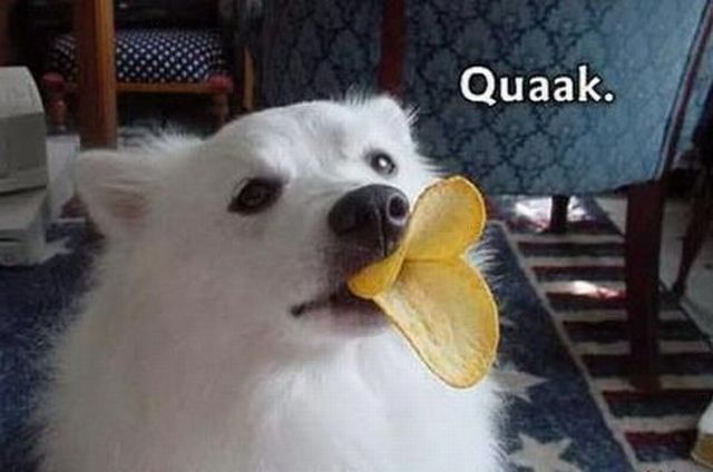 cute funny animals another batch with funny and cute animal photos