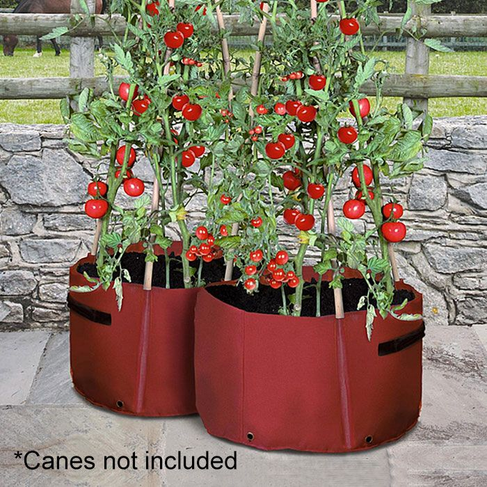 Climbing Tomato Patio Planter 2X   Growing Pouches U0026 Bags