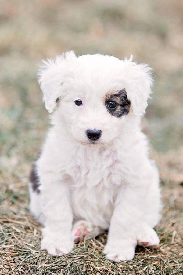 Adopt Me Bernie Amy Penny Leonard Daily Dog Tag Super Cute Puppies Cute Animals Animals