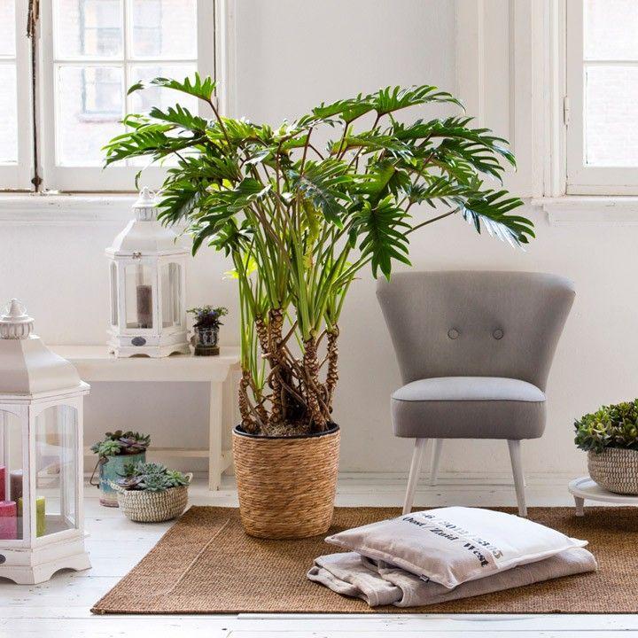 Een grote plant als stralend middelpunt van je woonkamer