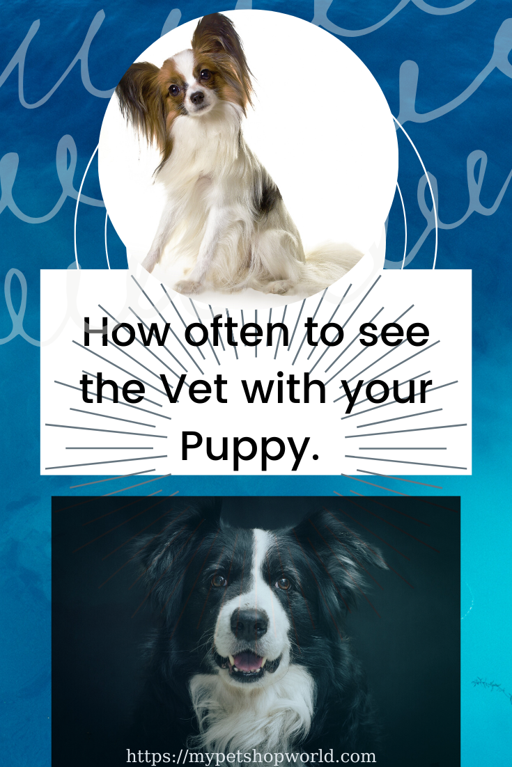 Pin On Pet Information