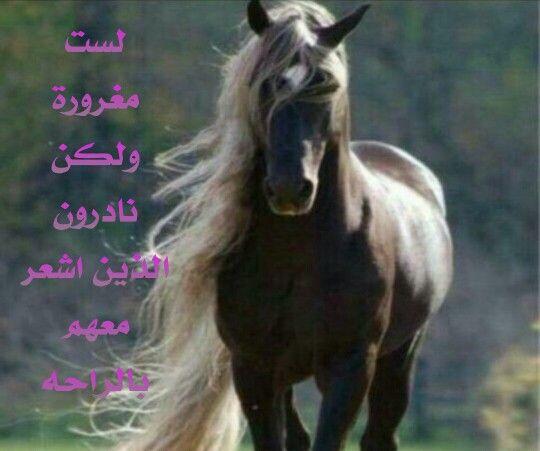 لست مغرورة Horses Animals Qoutes