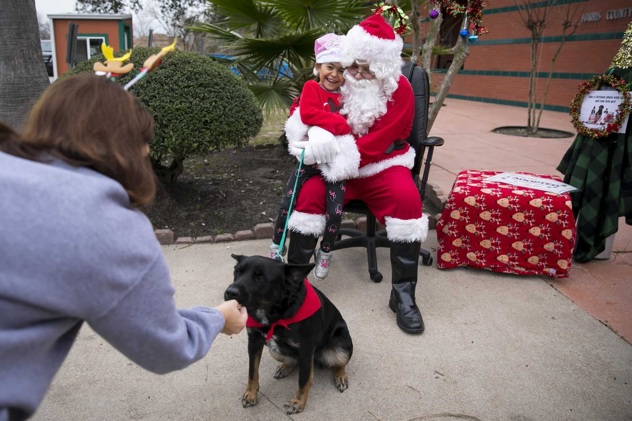 Harris County Animal Shelter Helps Dogs Cats Find Homes For The Holidays Animal Shelter Animals Dog Sitting