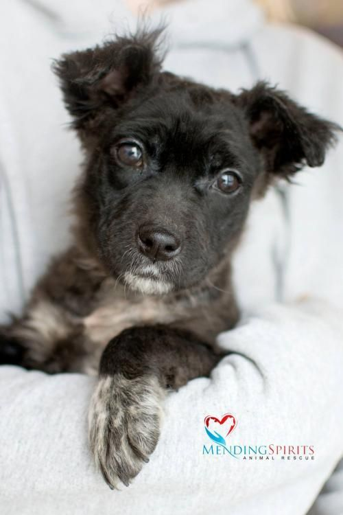 Adopt Bear On Poodle Dog Dogs Living With Cats