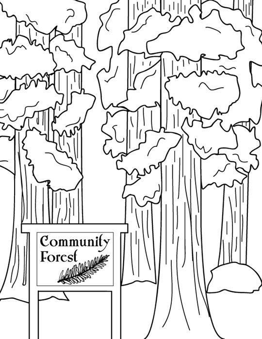 community forrest sequoia trees california state trees to print and color