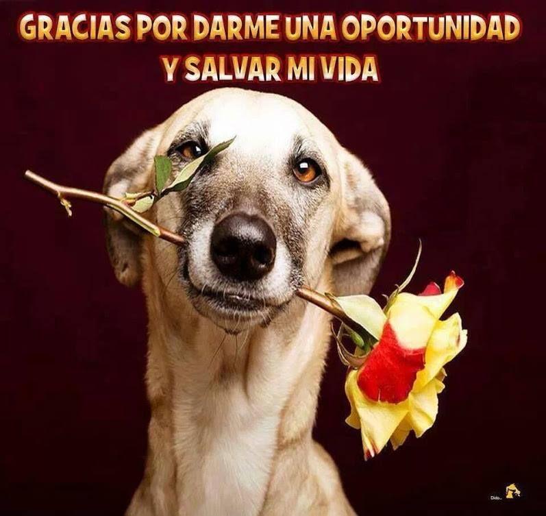 Gracias Por Darme Una Oportunidad Perros Amo Los Perros Y