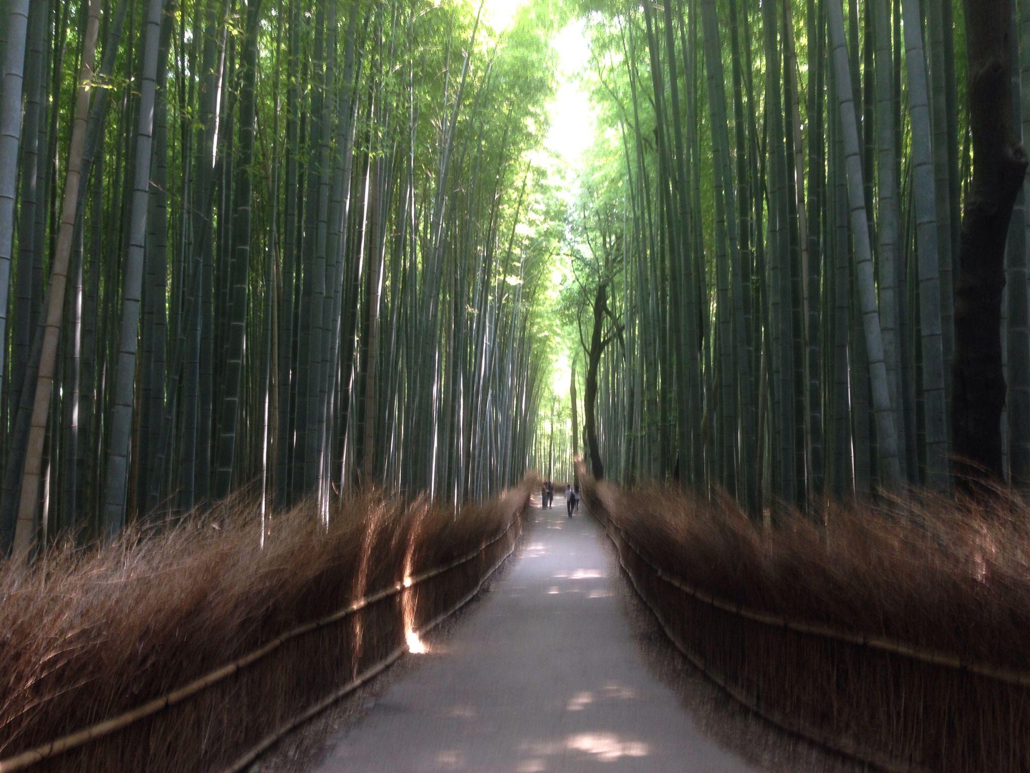 京都 嵯峨野 竹林の小径
