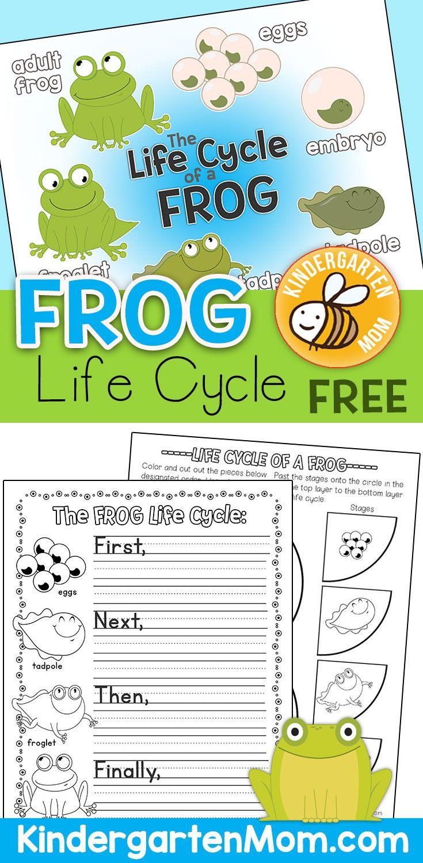 Life Cycle Worksheets For Kindergarten