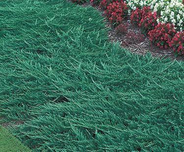 Juniper Bloom Iq Sloped Garden Shade Plants Farmhouse Landscaping