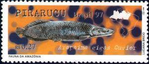 Pirarucu (Arapaima gigas)