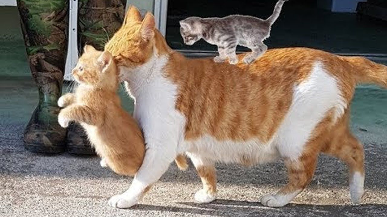 Mother Cats Taking Care And Protecting Their Cute Kittens Safety Mom Cat And Kitten Meow Moe In 2020 Kitten Mom Cute Kitten Gif Kittens Cutest
