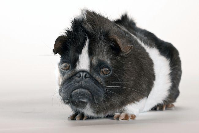 26 Incredible Non Real Hybrid Animals Zoo Of Crazy