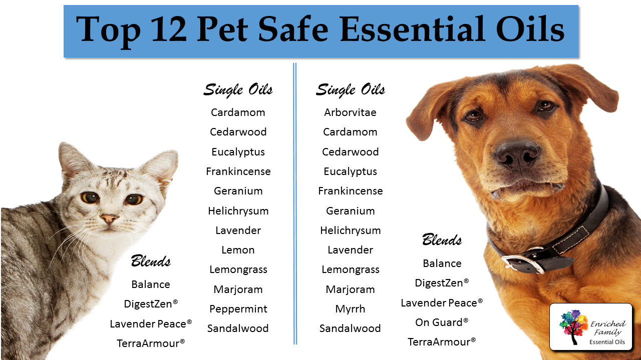 Top 10 essential oils for dogs and cats Top essential