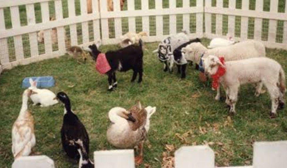 Pin by Bobbi Winters on Pocket pets Petting zoo birthday