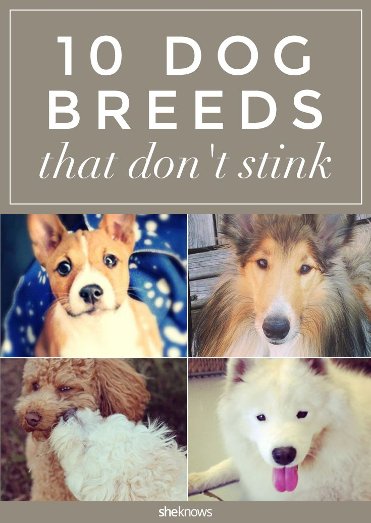 Sheknows Dog Breeds Dogs Pet Smell