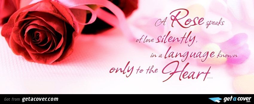 Rose and heart Facebook cover | Timeline cover | Get A Cover ...