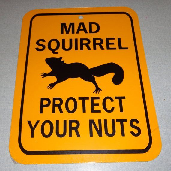 Mad Squirrel Protect Your Nuts Funny Squirrel Sign 6x8 Inch Aluminum