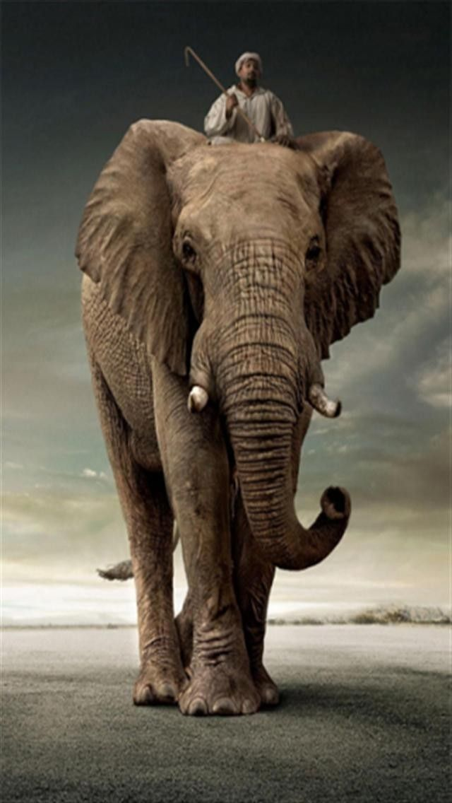Elephant Rider Animal640x1136 wallpapers.jpg (640×1136