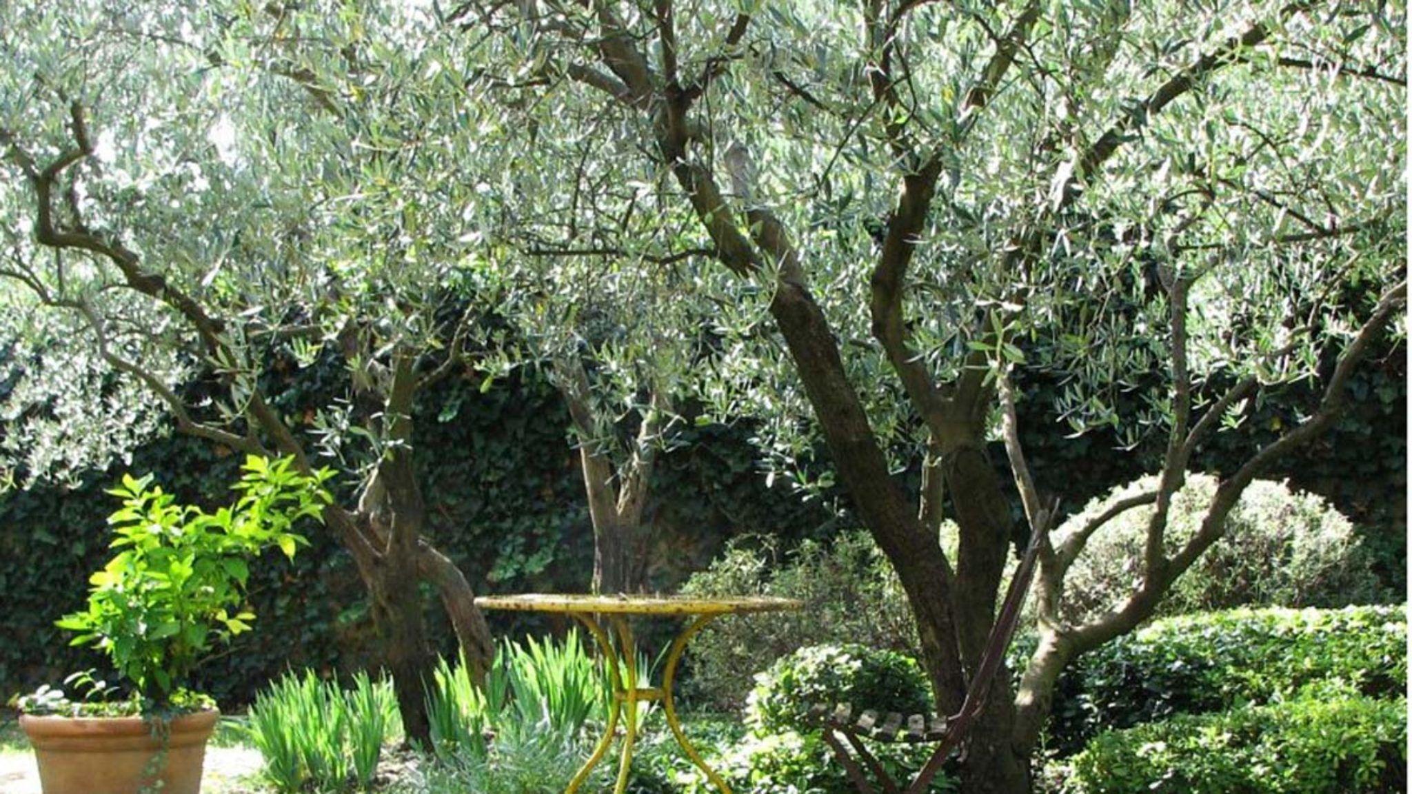 Garden Housecalls - Gun-Shy About Trees?