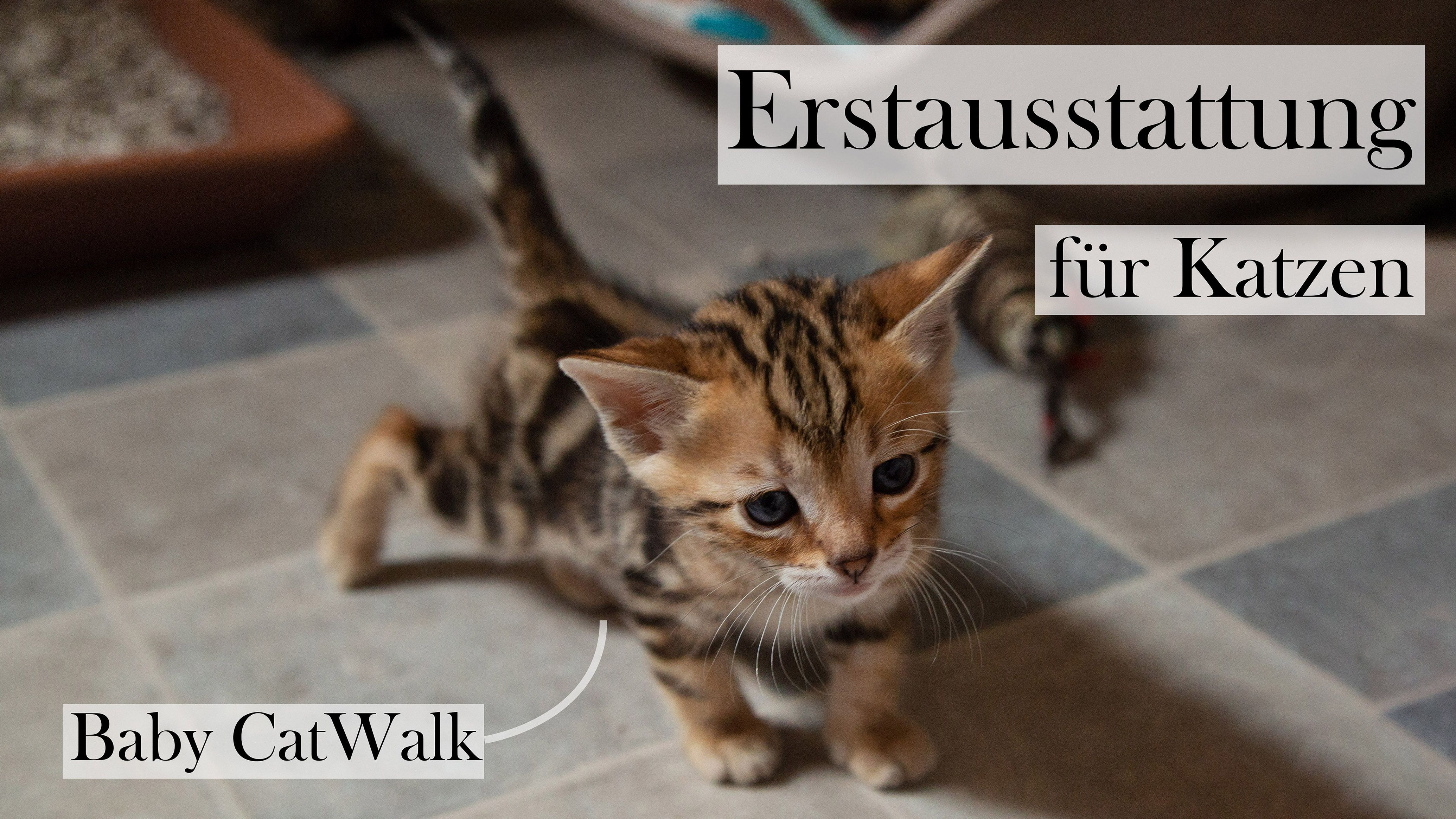 Es Zieht Eine Katze Bei Dir Ein Die Erstausstattung Fur Katzen Ist Besonders Wichtig Und Deswegen Gibt Es Eine Checklist Katzen Baby Katzen Katze Aus Tierheim