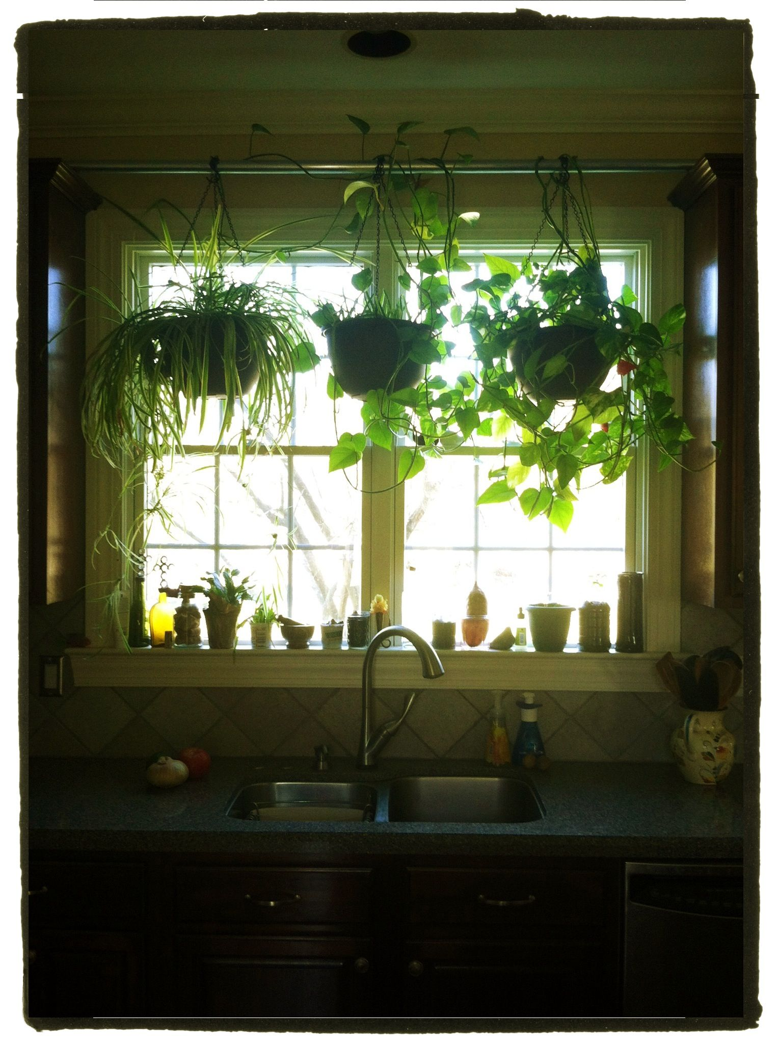 Hang Plants In Your Kitchen Window Without Putting Any Holes In Drywall 1 Place Wood Blocks 2x4s On Top O Kitchen Plants Window Plants Kitchen Window Decor