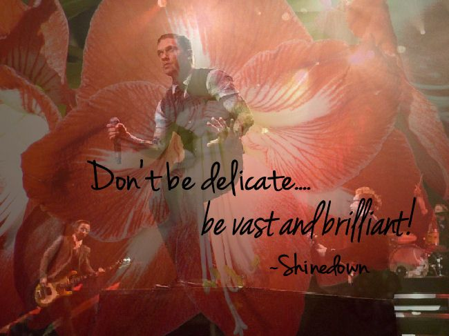 Don't be delicate, be vast and brilliant  - Shinedown